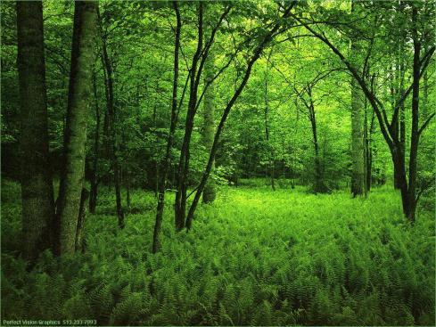¿Qué bosque?